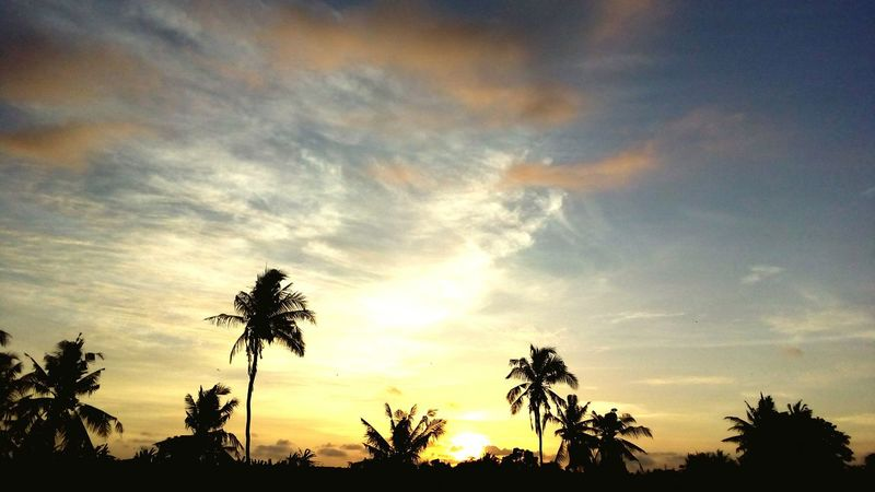 Bali Tree Palm Tree Sunset Sky Dramatic Sky Silhouette Beauty In Nature Nature