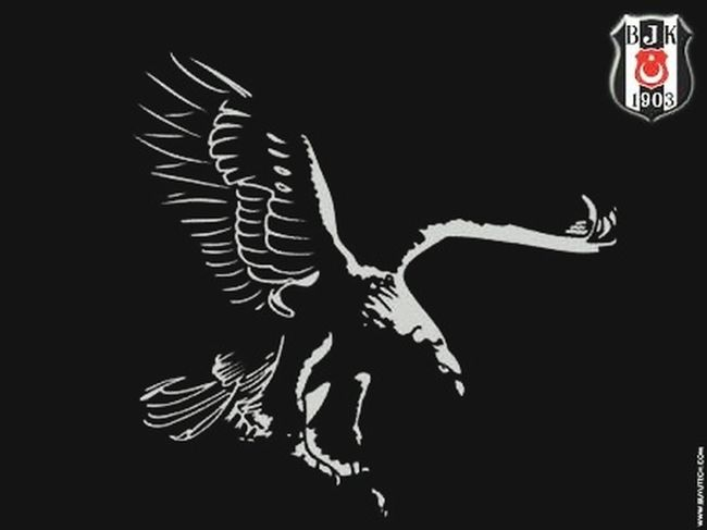 Blackeagle Besiktas Championsleague Black Background Animal Skull Studio Shot No People Animal Themes Mammal