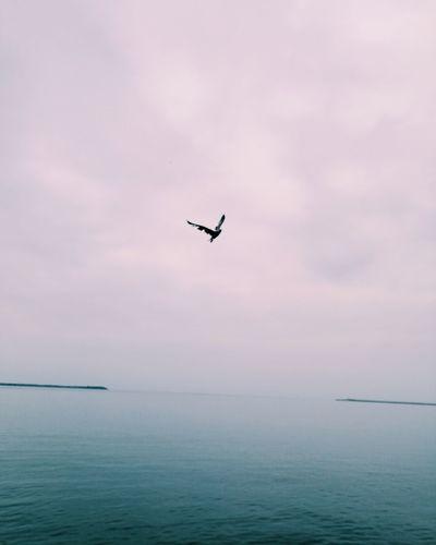 Bird flying over sea against sky