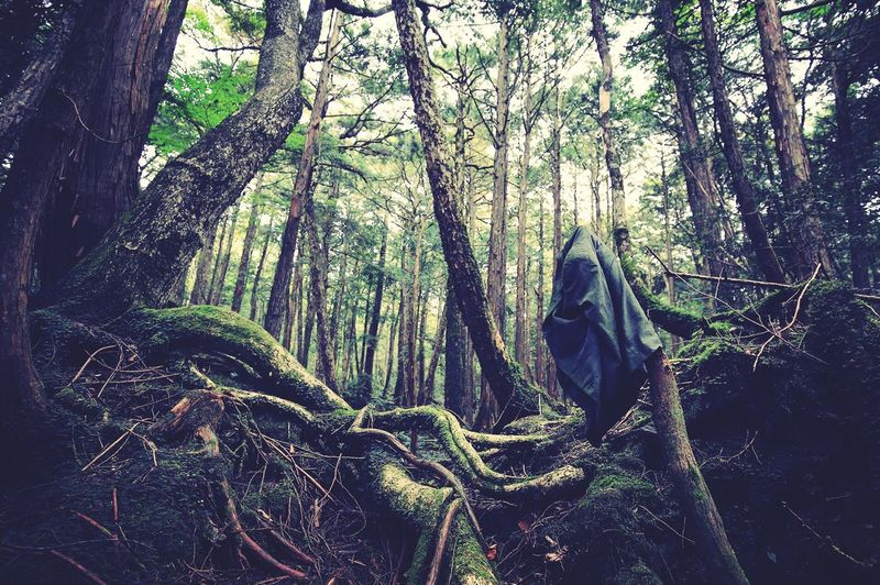 Aokigahara, the suicide forest in Japan Tree Forest Nature Death Suicide Green First Eyeem Photo