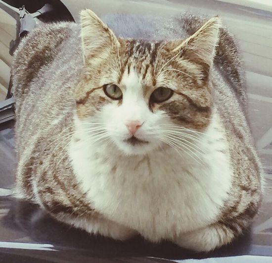 Cat Cheese! Kedicik Kedi Istanbul Turkey Istanbul Relaxing Popular Photos