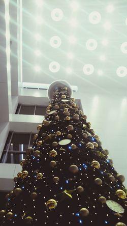 ёлка Новый год 2016 праздник новогодние украшения NewYear Celebrate Christmas Tree Петрозаводск Russia