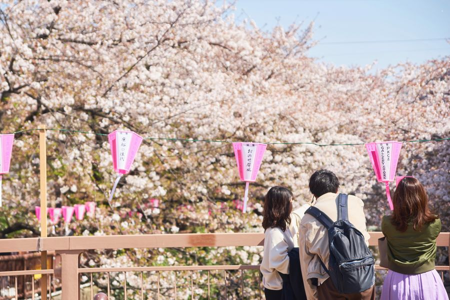 Nature_collection Nakameguro Sakura Plant Flower Women Flowering Plant Fragility Nature Adult Tree Springtime Cherry Blossom Real People Pink Color Freshness Beauty In Nature Cherry Tree Day Togetherness Growth Blossom Leisure Activity