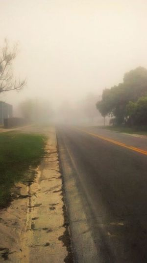 Early morning fog, Nature's Diversities
