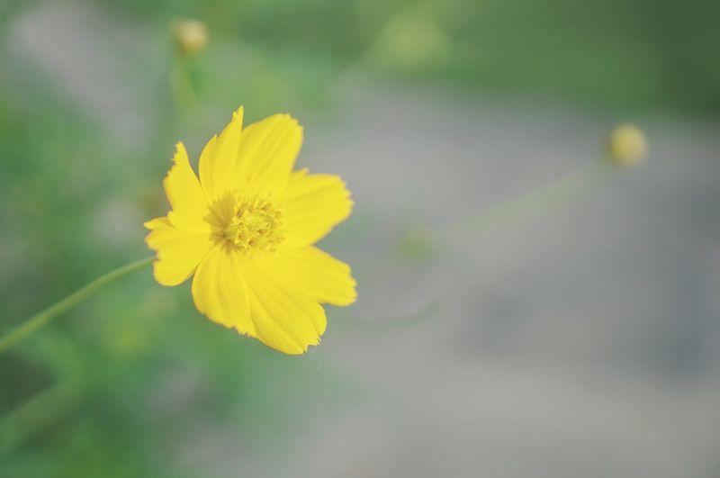 Blooming ahead