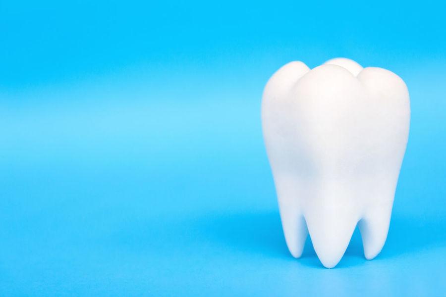dental concept Dental Dental Hygiene Dentist Dentistry Blue Blue Background Close-up Day Dental Health Indoors  No People Studio Shot Teeth Teeth Model