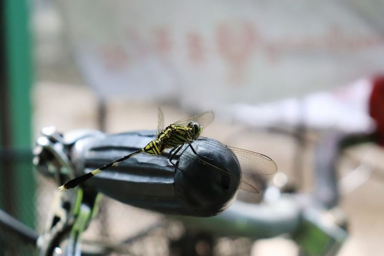 Dragonfly Dragonfly Macro Animal Insect Close-up Animal Themes Housefly Animal Wing Butterfly - Insect Moth Animal Antenna Symbiotic Relationship Pest Pollination Flapping Arachnid Mosquito Fly Spider Damselfly Web Spider Web Arthropod Jumping Spider Confined Space