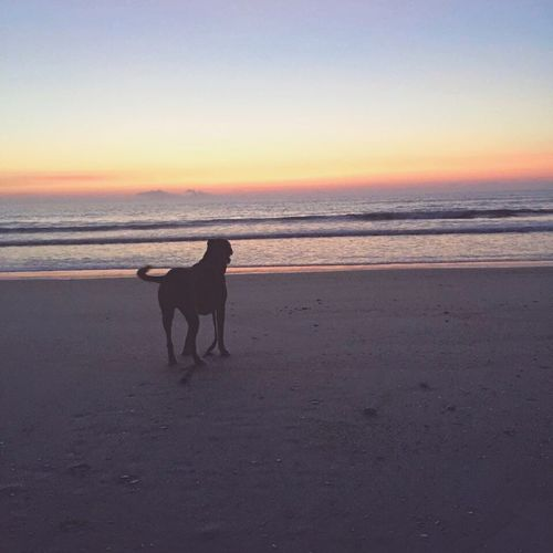 Sea Dog Beach Water Sky Shore Ocean Florida Sunrise Beauty Beautiful Oceandog Sand Peaceful Love Life EyeEmNewHere