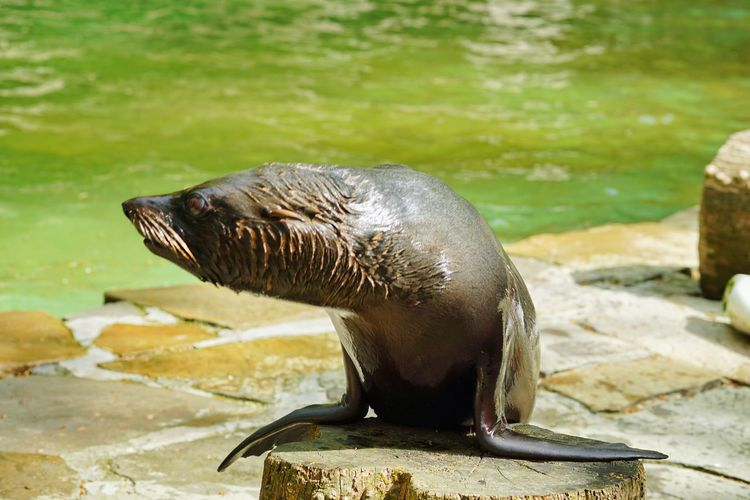 Seal Life EyeEm