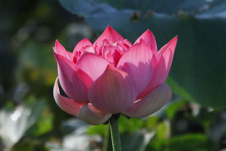 LOt us Flower