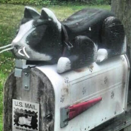 Kitty cat mail box! Whos ever mailbox this is im stealing it! 302 Hockessin Toofunny Iloveit