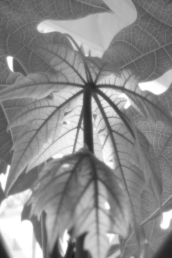 Low angle view of tree leaves
