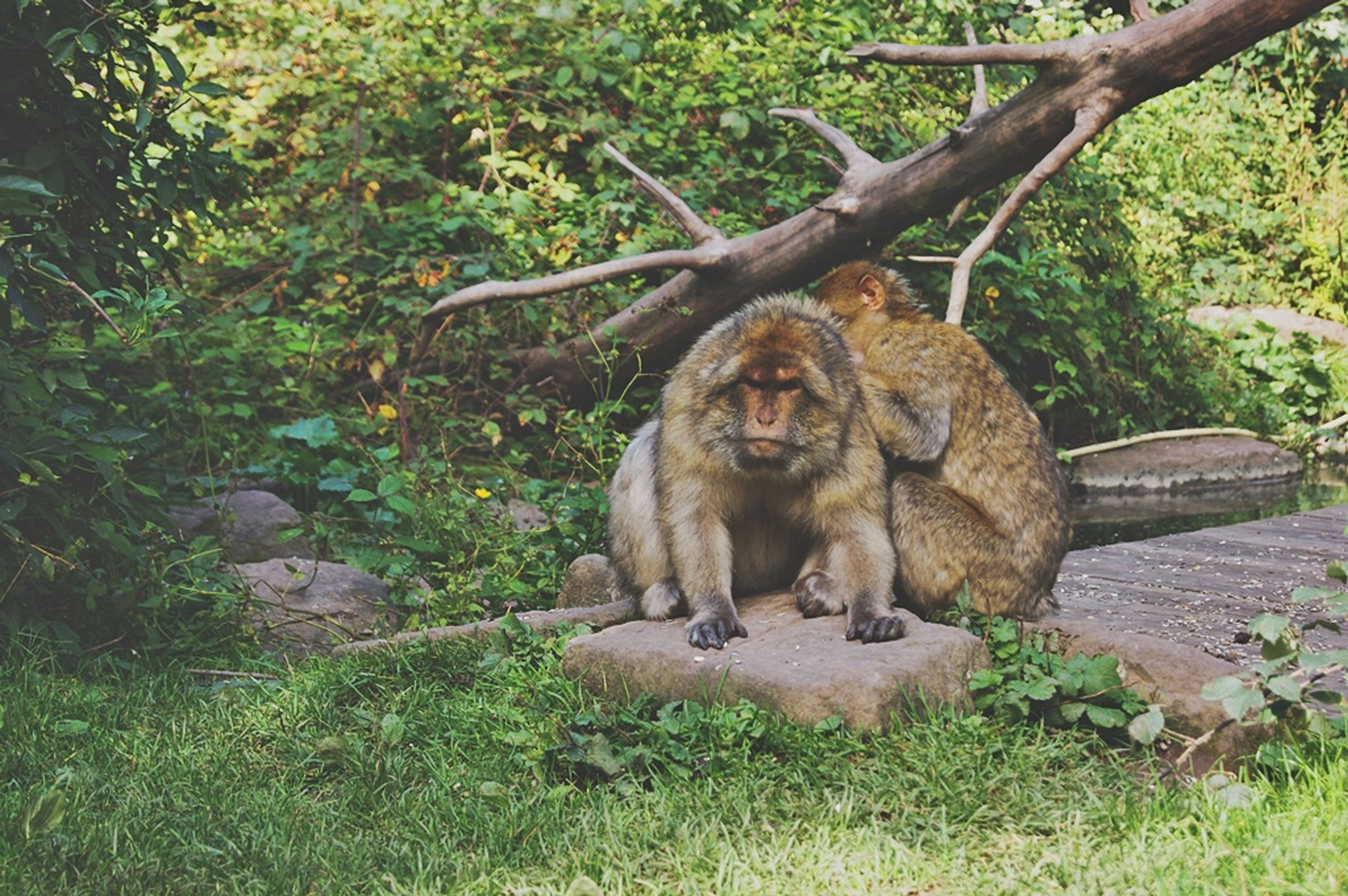 animal themes, mammal, one animal, sitting, wildlife, relaxation, animals in the wild, tree, monkey, forest, portrait, looking at camera, plant, lion - feline, lying down, resting, nature, primate, outdoors, day