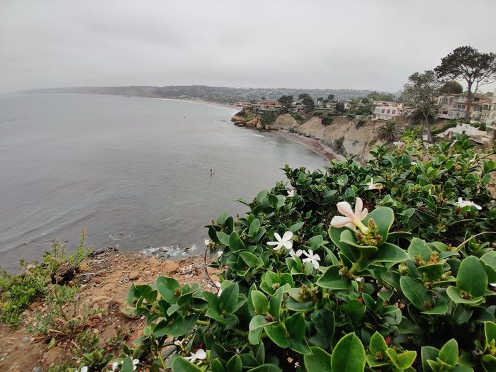 High angle view of flowering plants by sea against sky