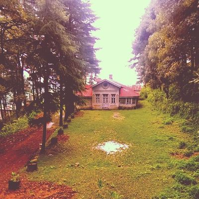 old Wooden House in the Woods amidst Trees so Serene n Relaxing in the Hills Dalhousie Himachal Greenery Water Tree Hut Lawn Garden Grass Driveway Oldhouse Nature Indiapictures India Incredibleindia Lonelyplanet Indiatraveller Himalaya