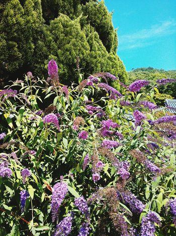 Beautiful Colors Purpleand Blue Sky