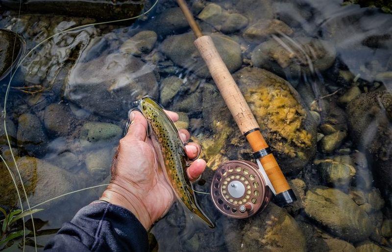 Cropped hand holding fish at riverbank