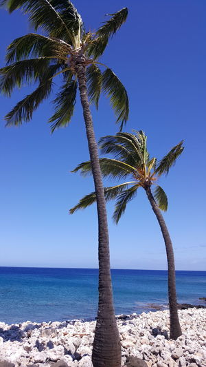 Two Palms Palm Trees Hawaii Beach Sea Sky Palm Tree Horizon Over Water Water Nature Tree Scenics Sand Outdoors No People Day Blue Vacations Beauty In Nature