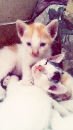 New babies ^_^ Mwah ♥ Mwaahh  Meow🐱 Cuties :) Iwanttosquishthem!
