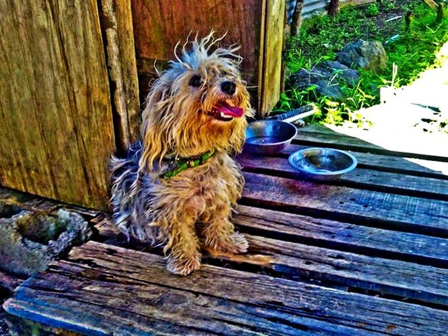 My love for animals this sue Dog Pets Domestic Animals Wood - Material Outdoors Close-up 758 Caribbean Life Petslife One Animal No People Day EyeEmNewHere