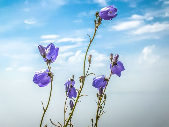 Close-up of purple flowers blooming against sky