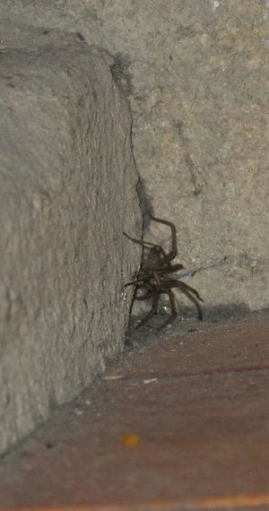 The spidee seemed friendly enough, but I decided to keep my distance nether the less. The traditional British way. Spider Frightening Animals Horror Nature On Your Doorstep Elegant Secretive Spinechilling Friendly Freaky