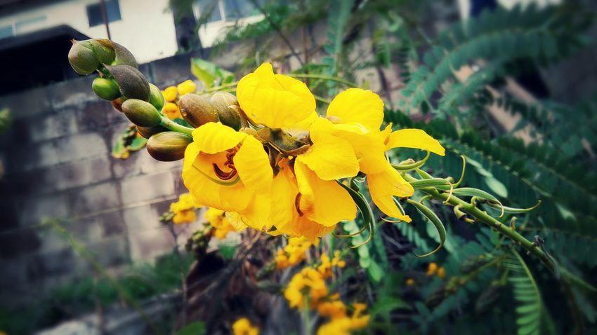 Flowers Photo Editor Pro Taking Photos