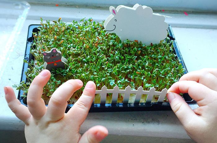 Spring Springtime Growth Growing Better Cress Toddlerlife Hands Busy Hands Hands At Work Sheep Cat White Picket Fences White Picket Fence White Fence Green Green Green Green!  Sprung Urban Spring Fever Things I Like Things That Are Green Things I Like