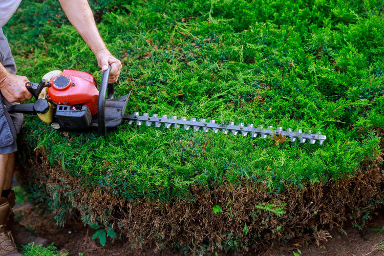 Low section of man using hedge clippers by plant