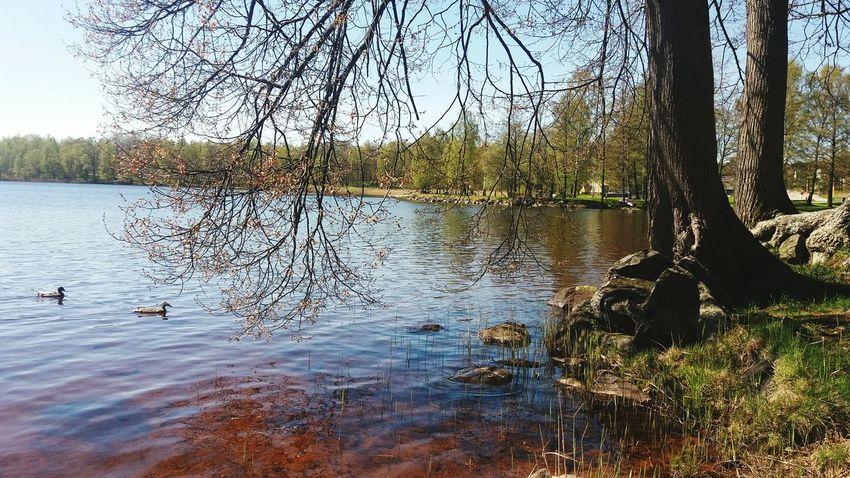 Lakeside Lake View Beautiful Nature Sun Sunny Day Sunnymood SunnySaturday Water Trees Cameraphone
