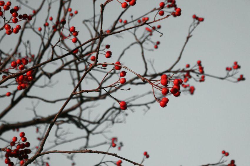 Walking Around EyeEm Nature Lover Red Getting Inspired EyeEm Best Shots Showcase: December Eye For Photography Canonphotography Weniger Ist Gleich Mehr Trees