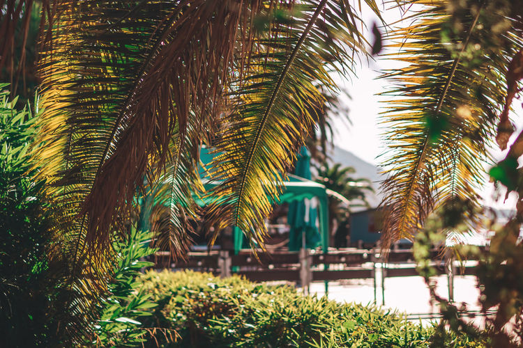 Close-up of palm trees against plants