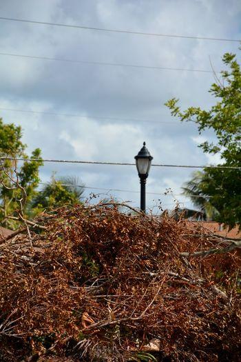 Hurricane Irma 2017 Storm Debris No People Outdoors Hurricane TreePorn Piles Of Wood Tree South Florida Debris Damages Hurricane Season  Fallen Tree Aftermath Roadside Downed Tree Storm Damage Hurricane Damage Downed Trees Lamp Post