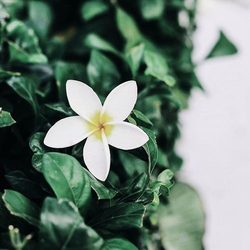 | 🍃 🌼 🍃 💭 🎧 | @vsco.flowers repost my photo 😙. _____________________________________________ You will always be in my life, even if i'm not in your life. Cause you're in my memory... _____________________________________________ VSCO Vscocam Vscovietnam Vscoflowers Flower Vietnam Hometown Streetphotography Street Country Countryside Grass Green White Fresh Plant Morning Road Love Cool Photooftheday Photos Tb View Ontheroad nature fresh instadaily instagood instamood