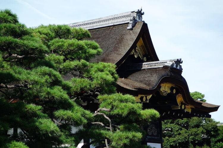 Ninomaru EyeEmNewHere Japan Ninomaru Palace Roof Tree Architecture Black Pine Kyoto Palace The Architect - 2018 EyeEm Awards