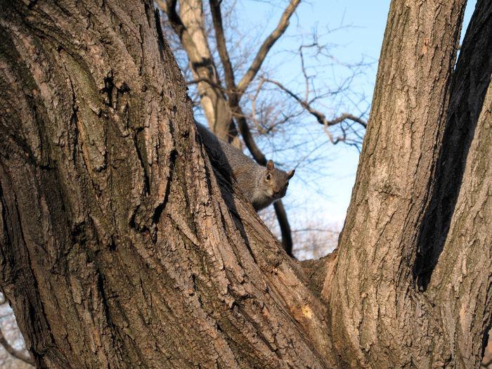 Branch Squirrel