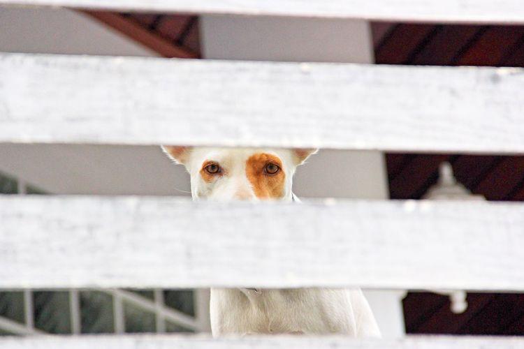 Portrait of cat peeking through fence