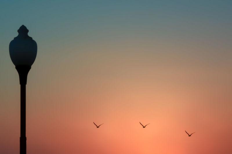 Animal Animal Themes Beauty In Nature Bird Clear Sky Dusk Flying Nature Orange Color Silhouette Sky Sun Sunset Capture Tomorrow