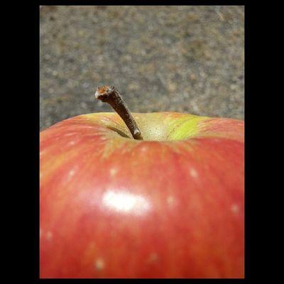 Drumhellersorchard Appleorchard Apple Samsung galaxy phone camera instagram