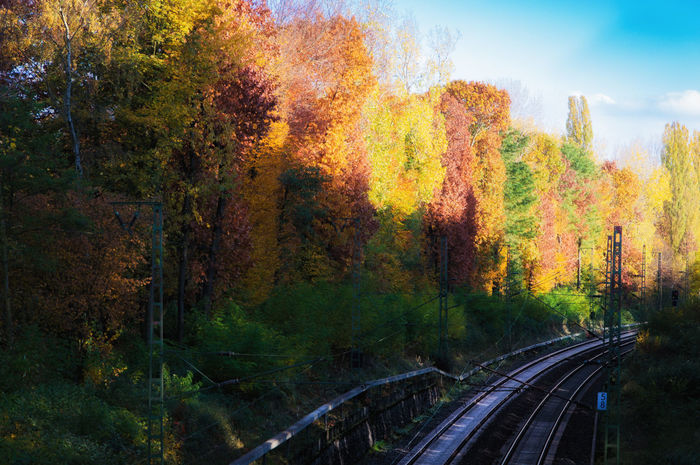 Autumn trails Autumn Autumn Colors Autumn Leaves Landscape Leading Railway Ruhrgebiet Nature's Diversities The Way Forward Vanishing Point Colors Of Autumn