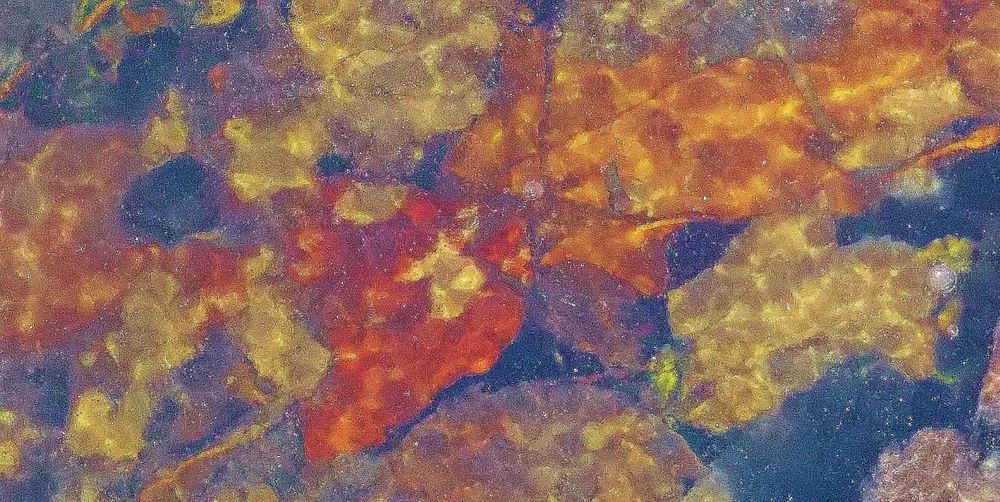 Leaves changing colors and trapped under the ice Abstract Arrangement Backgrounds Brown Leaves Leaves Under Ice, Nature, Abstract No People Wintertime Winyer,