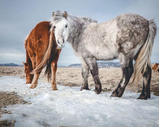 Horses standing on field against sky