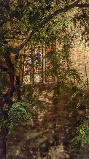Feliz domingo ! https://youtu.be/3jY545sigp0 Colour Of Life Contemplation Meditating Samsung Galaxy S6 Edge Shadows & Lights Shadow Vitreaux Vidrieras Iglesia Iglesia Católica  Ancient Architecture Tree Tree Shadows Shadows On The Wall Shadows_collection
