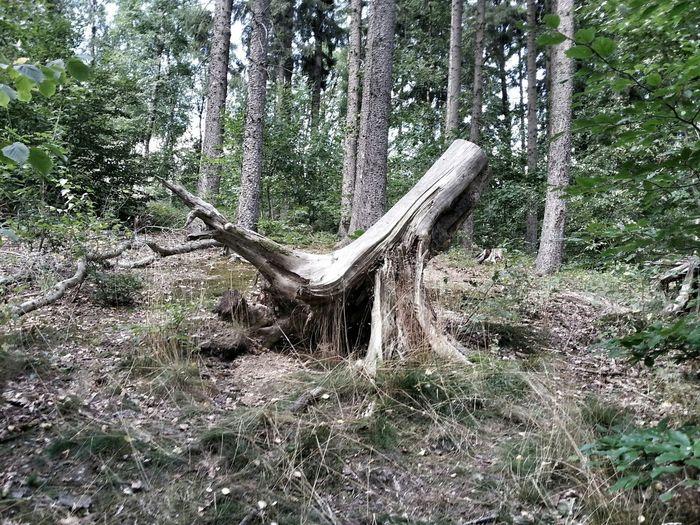 Alter Baum Nature Natur Outdoor