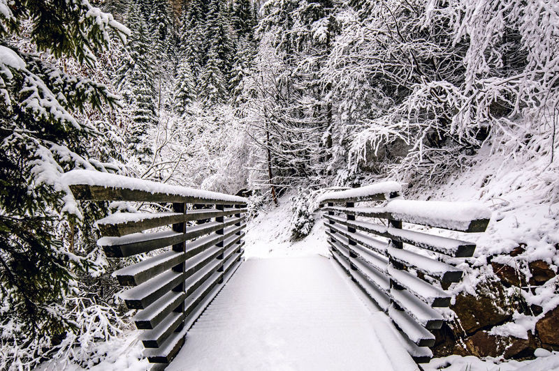 Bridge to winter. Outdoors Tree Nature Bridge Winter Snow White Nature Beauty In Nature Tranquility Val Di Non Trentino Alto Adige Trentino  Proves