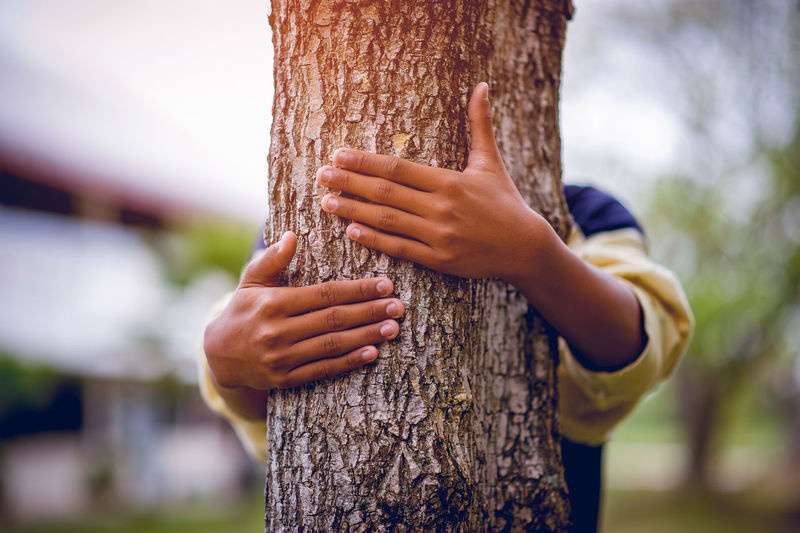 Close-up of man holding tree trunk
