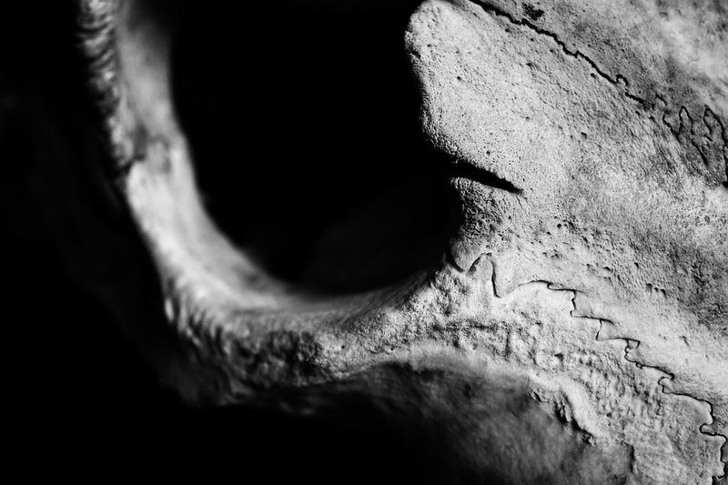 skull abstraction 01 Structure Bokeh Black And White Photography Black And White Macro Photography Bone  Skull darkness and light Close-up Nature Shadow Textured  Selective Focus