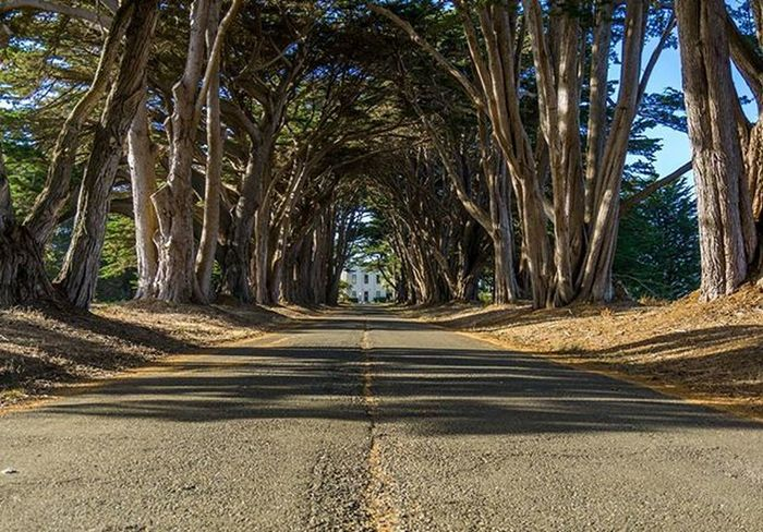 I gave in and invested in Lightroom . first edit and I think it turned out good for a first timer;) this shot is the Cypress tree tunnel in point Reyes, California. Shot with Sony a6000. A must see if you are in the area. Sonyimages Sony A6000 Explore Nature Wanderlust 1x5 Travel SF Sanfrancisco California Sonyalpha AlwaysSF Nowrongwaysf Wildcalifornia Rawcalifornia Wildbayarea Roadtrippers Discovertheroad TeamTravelers Outdoors Insta Showcase April