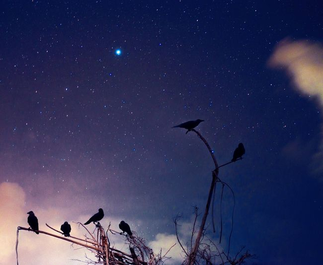 Low angle view of silhouette birds against sky at night