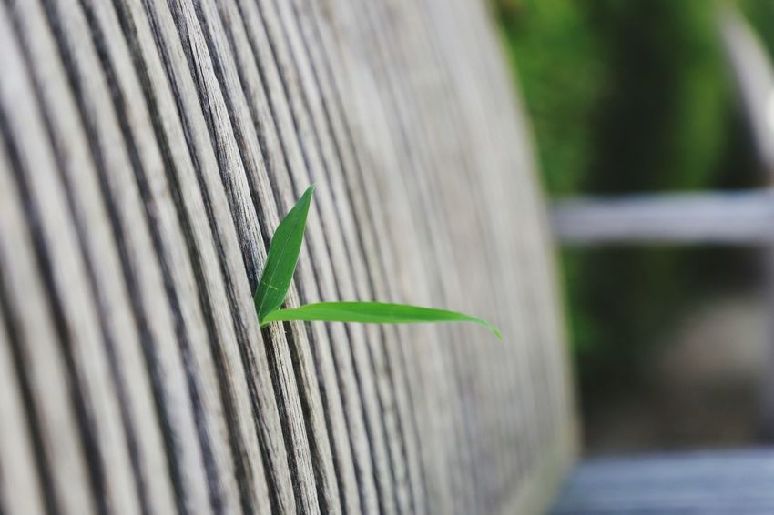Nature always finds a way and so will you. Green Park Bench Wood Possible Special Green Color Day No People Close-up Focus On Foreground Nature Plant Selective Focus Outdoors Growth Leaf Pattern Boundary Fence Barrier Plant Part Grass Invertebrate Beauty In Nature
